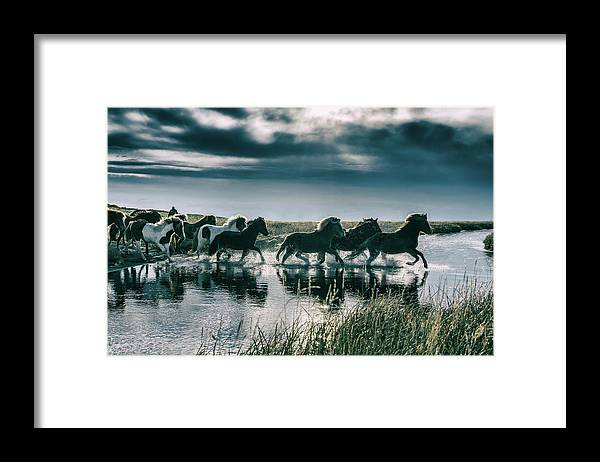 Horse Framed Print featuring the photograph Group Of Horses Crossing A River by Arctic-images