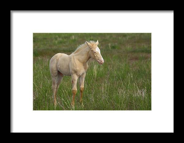 Wild Framed Print featuring the photograph Growing Up Wild by Gene Praag