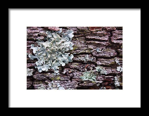 Nature Framed Print featuring the photograph Growth by Nicole Doering