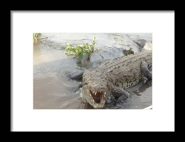 Lake Framed Print featuring the photograph Grumpy Crocodile by Lisa Piper