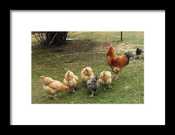 Black Dog Farm Orma Framed Print featuring the photograph Guardian by Carol Hoffman