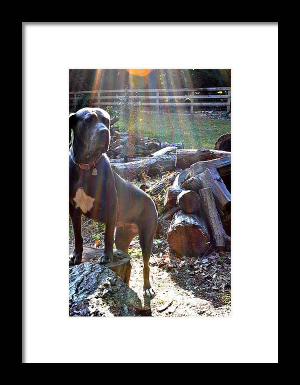 Dog Framed Print featuring the photograph Guarding The Kingdom by Carlee Ojeda