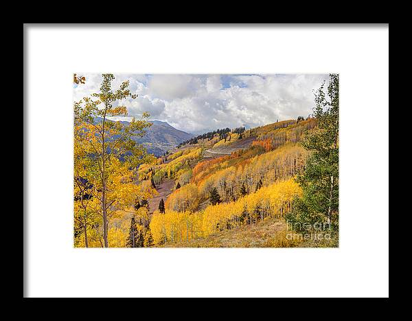 Aspen Framed Print featuring the photograph Guardsman Pass Aspen - Big Cottonwood Canyon - Utah by Gary Whitton
