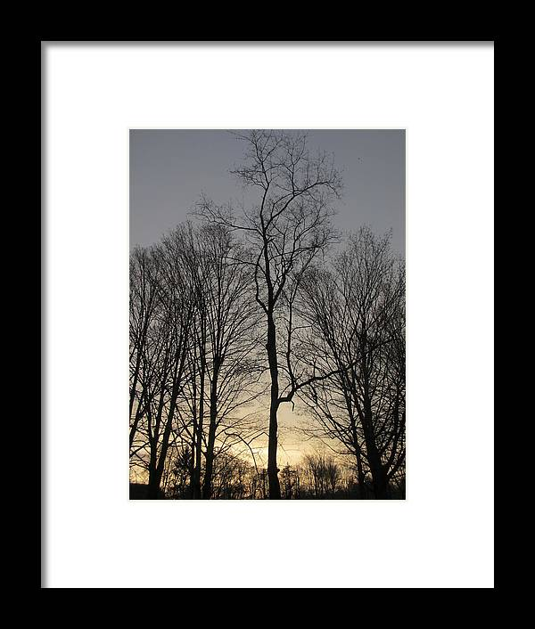 Tree Framed Print featuring the photograph Guidance by Tiffany Martin