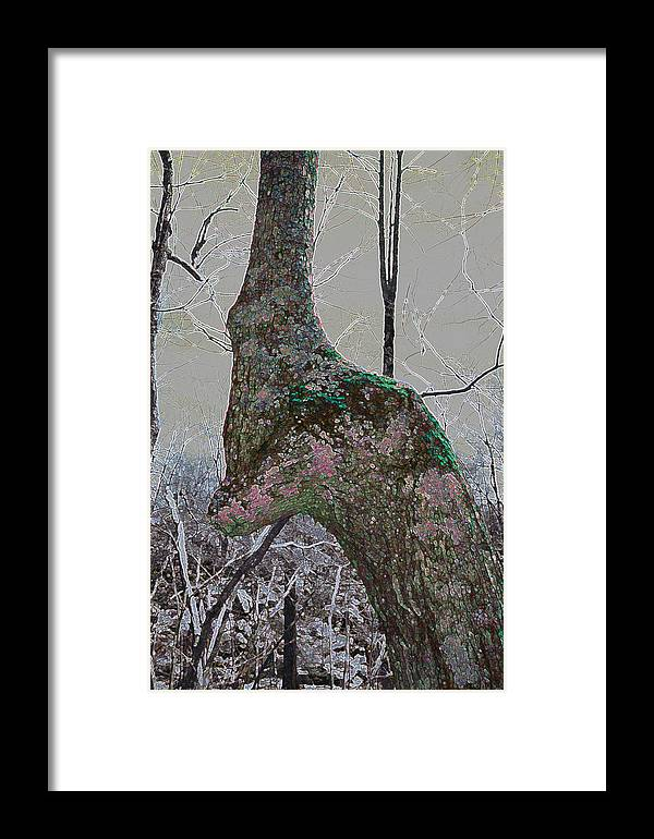 Blue Ridge Parkway Framed Print featuring the photograph Guide by Jason Chewning