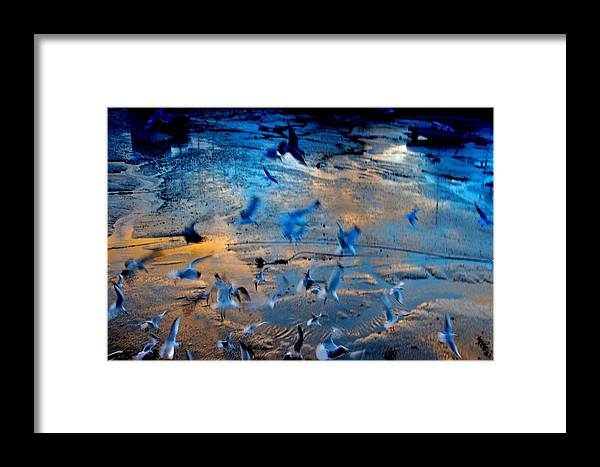 Nik Watt Framed Print featuring the photograph Gulls by Nik Watt