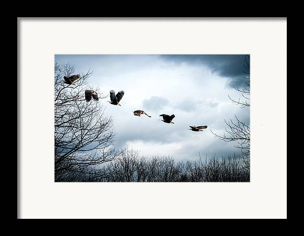 Eagle Framed Print featuring the photograph Half Second Of Flight by Bob Orsillo