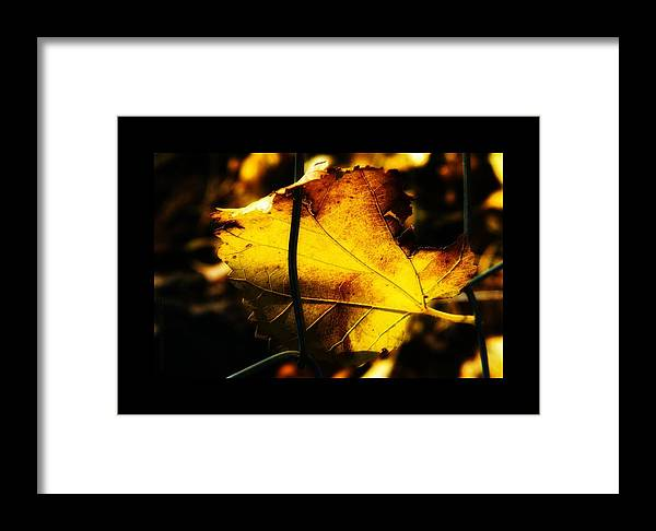 Leaf Framed Print featuring the photograph Hang On by Mimulux patricia No