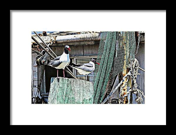 Seagulls Framed Print featuring the digital art Hangin' Out On The Pier by Carrie OBrien Sibley