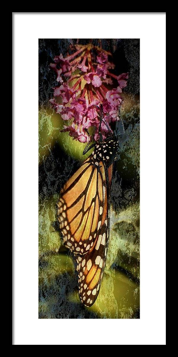 Monarch Butterfly Framed Print featuring the photograph Hanging Around by Angie Tirado
