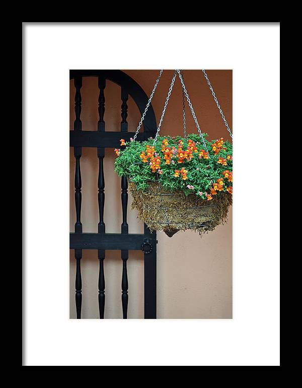 Flowers Framed Print featuring the photograph Hanging Flowers And Black Gate by Bruce Gourley