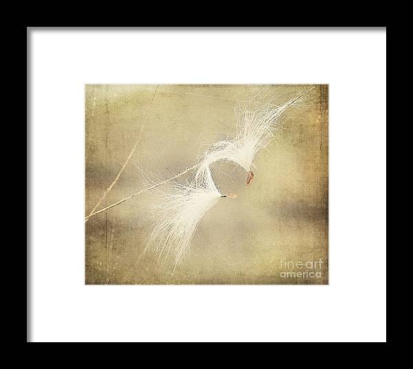 Seeds Framed Print featuring the photograph Hanging On by Pam Holdsworth
