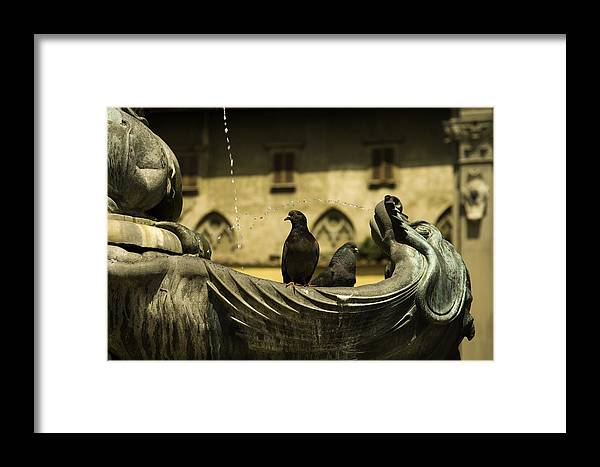 Pigeon Framed Print featuring the photograph Hanging Out by Curtis Dale