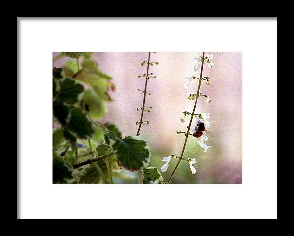 Bee Framed Print featuring the photograph Hanging Pot With Bee by Jack Thomas