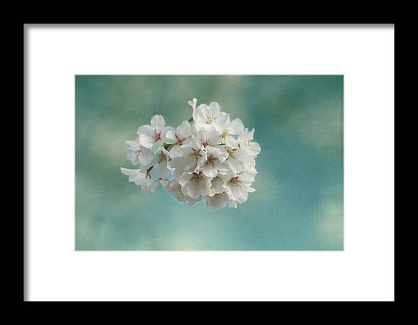 Cherry Blossom Framed Print featuring the photograph Happiness Is by Kim Hojnacki