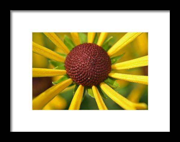 Happy Framed Print featuring the photograph Happy by Adam Barksdale