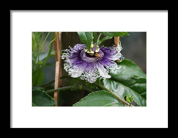 Butterfly Framed Print featuring the photograph Happy Bee by Chuck Hicks