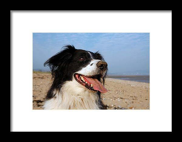 Animal Framed Print featuring the photograph Happy Dog by Steve Ball