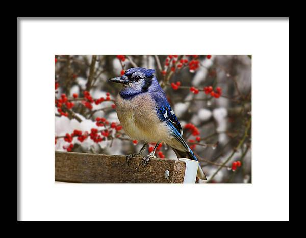 Happy Framed Print featuring the photograph Happy Holidays by Gary Holmes