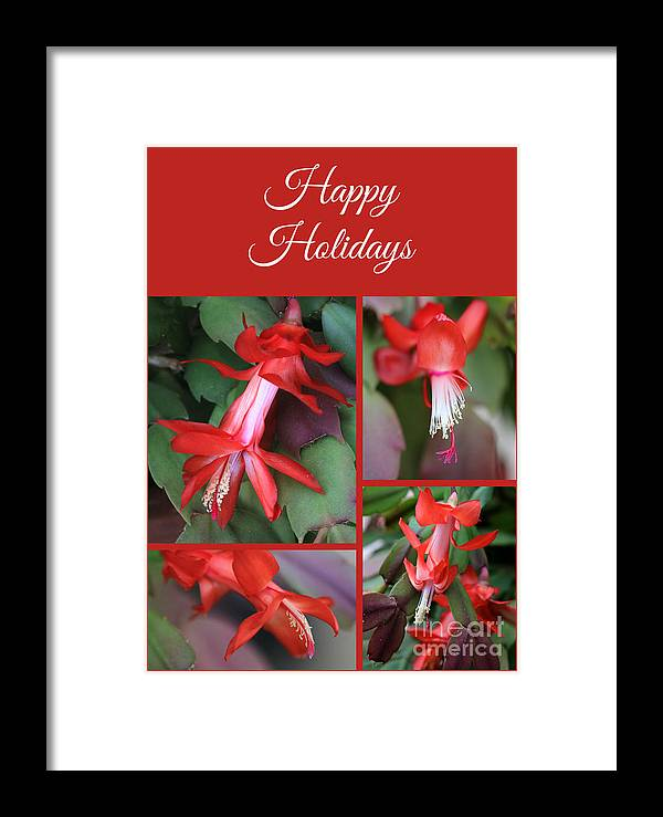 Christmas Cactus Framed Print featuring the photograph Happy Holidays Natural Christmas Card Or Canvas by Carol Groenen