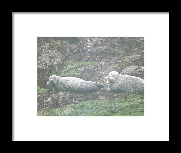 Framed Print featuring the photograph Harbor Seal Dual by Randy Esson