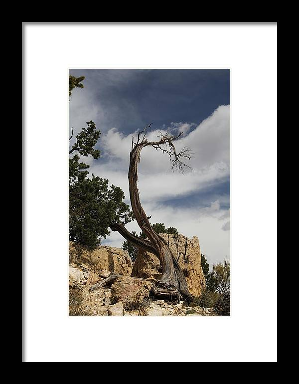 Tree Framed Print featuring the photograph hard life at the Grand Canyon by Renee Sinatra