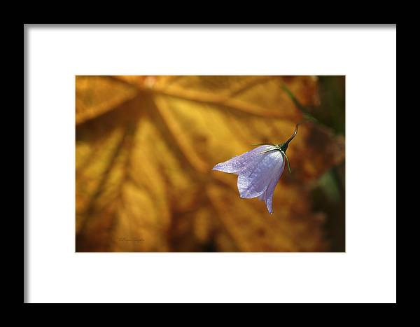 Indigo Framed Print featuring the photograph Hare Bell And Gold Leaf by Roger Snyder