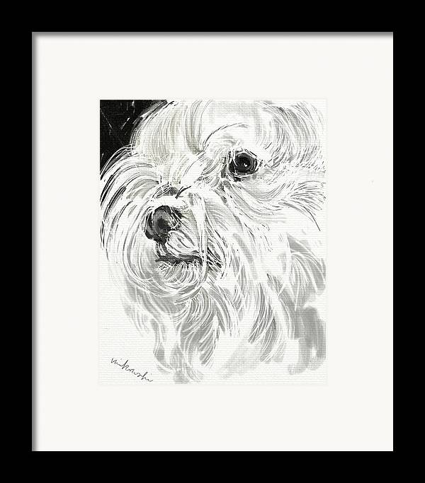 Maltese Framed Print featuring the jewelry Harley The Maltese by Linda Minkowski