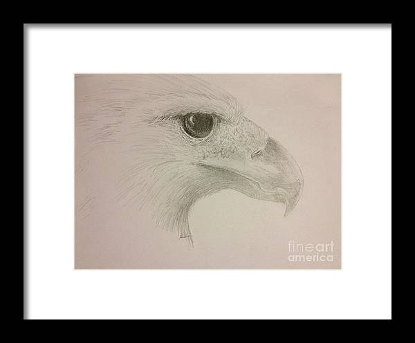 Harpy Eagle Framed Print featuring the drawing Harpy Eagle Study by K Simmons Luna