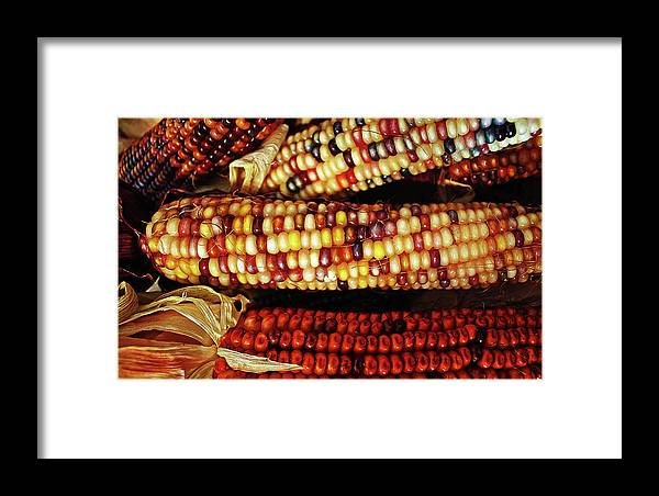 Indian Corn Framed Print featuring the photograph Harvest by Kami McKeon