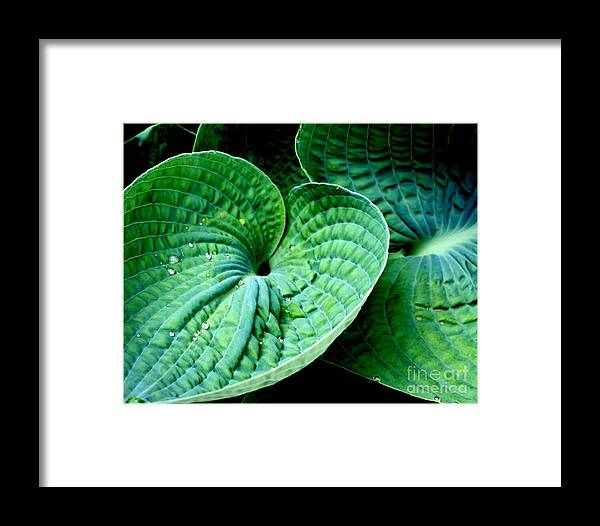 Hosta Framed Print featuring the photograph Have A Heart by Valerie Fuqua