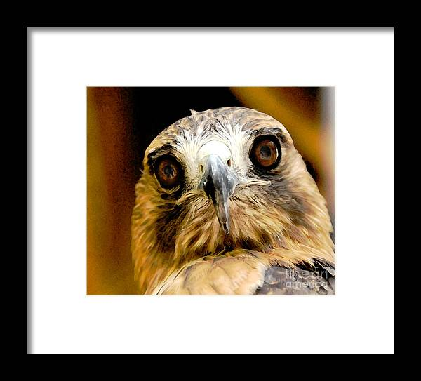 Hawk Framed Print featuring the photograph Hawkeye by Lois Bryan