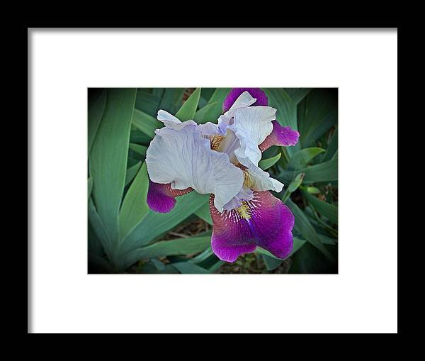 Framed Print featuring the photograph Hdr Iris by Regina McLeroy