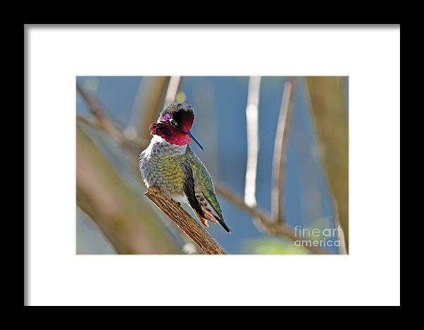 Nature Framed Print featuring the photograph He Is Showing Off by Laura Mountainspring