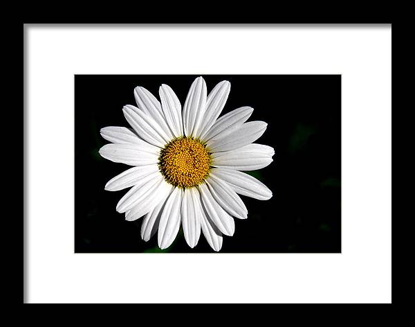 Framed Print featuring the photograph He Loves Me... He Loves Me Not... by Jessica A Lloyd