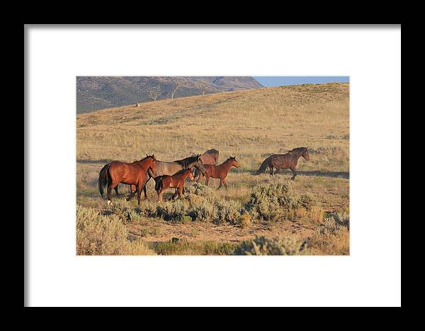 Wild Framed Print featuring the photograph Heading For The Hills by Gene Praag