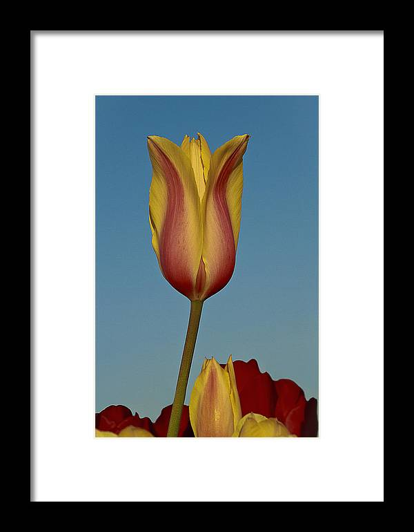 Heads Above The Rest Framed Print featuring the photograph Heads Above The Rest by Wes and Dotty Weber
