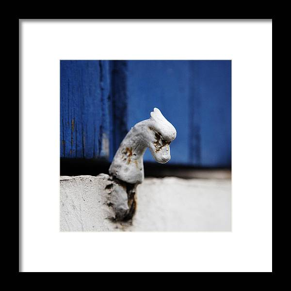 Animal Head Photographs Framed Print featuring the photograph Heady Shutter Catch by David Davies