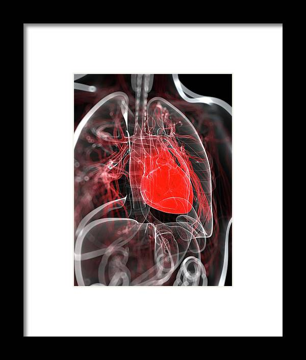 Physiology Framed Print featuring the digital art Heart Anatomy, Artwork by Sciepro