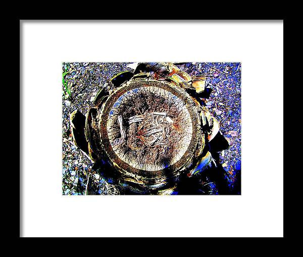 Saturated Framed Print featuring the photograph Heart Of Palm by Laurette Escobar