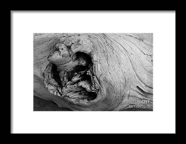 Olympic Peninsula Wa Framed Print featuring the photograph Heartwood - Bw - Wonderwood Collection - Olympic Peninsula Wa by Craig Dykstra