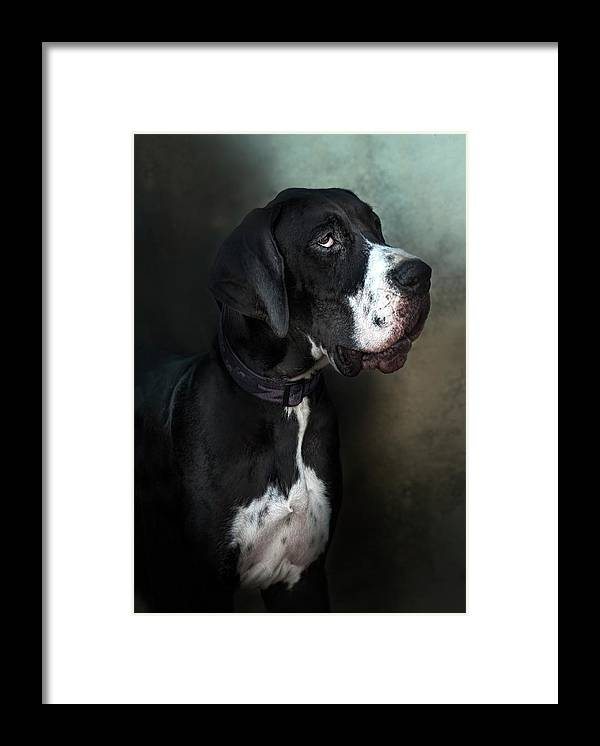 Pets Framed Print featuring the photograph Helga by Silversaltphoto.j.senosiain