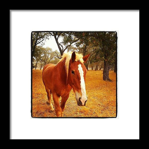Brown Framed Print featuring the photograph Hello Horse by CML Brown