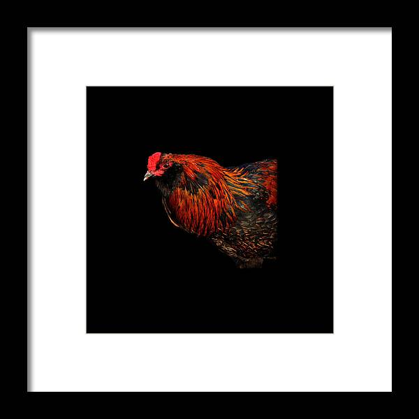 Fine Art Framed Print featuring the photograph hen by Leon Hollins III