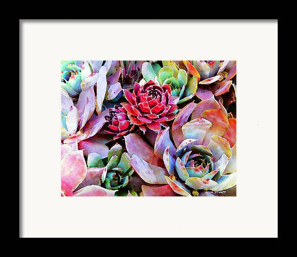 Hens And Chicks Photography Framed Print featuring the painting Hens And Chicks Series - Copper Tarnish by Moon Stumpp