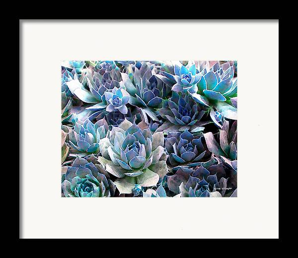 Hens And Chicks Photography Framed Print featuring the photograph Hens And Chicks Series - Evening Light by Moon Stumpp