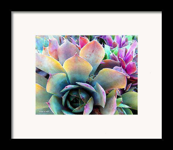 Hens And Chicks Photography Framed Print featuring the painting Hens And Chicks Series - Unfolding by Moon Stumpp