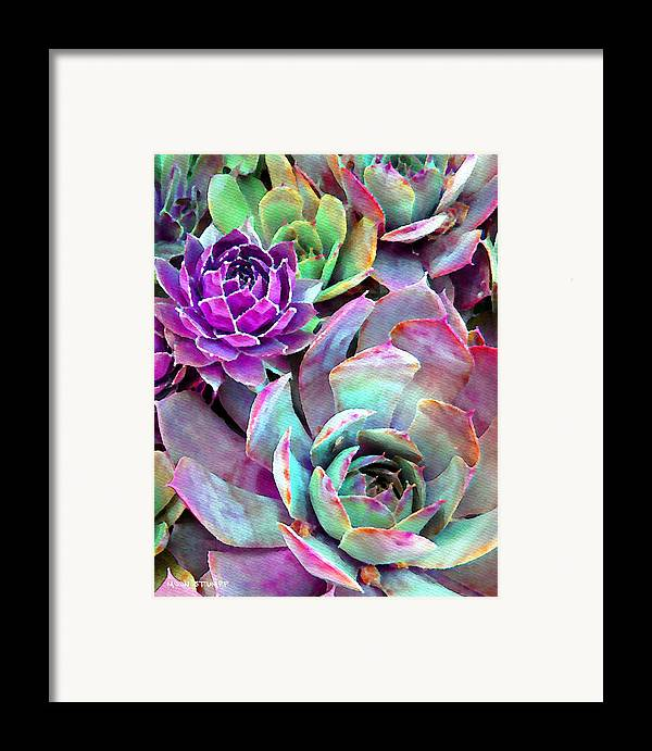 Hens And Chicks Photography Framed Print featuring the photograph Hens And Chicks Series - Urban Rose by Moon Stumpp