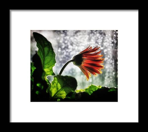 Flower Framed Print featuring the photograph Here Comes The Sun by Mark Fuller