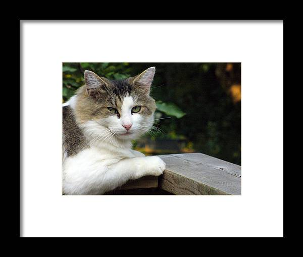 Cat Photography Framed Print featuring the photograph Here Is Looking At You by Lingfai Leung